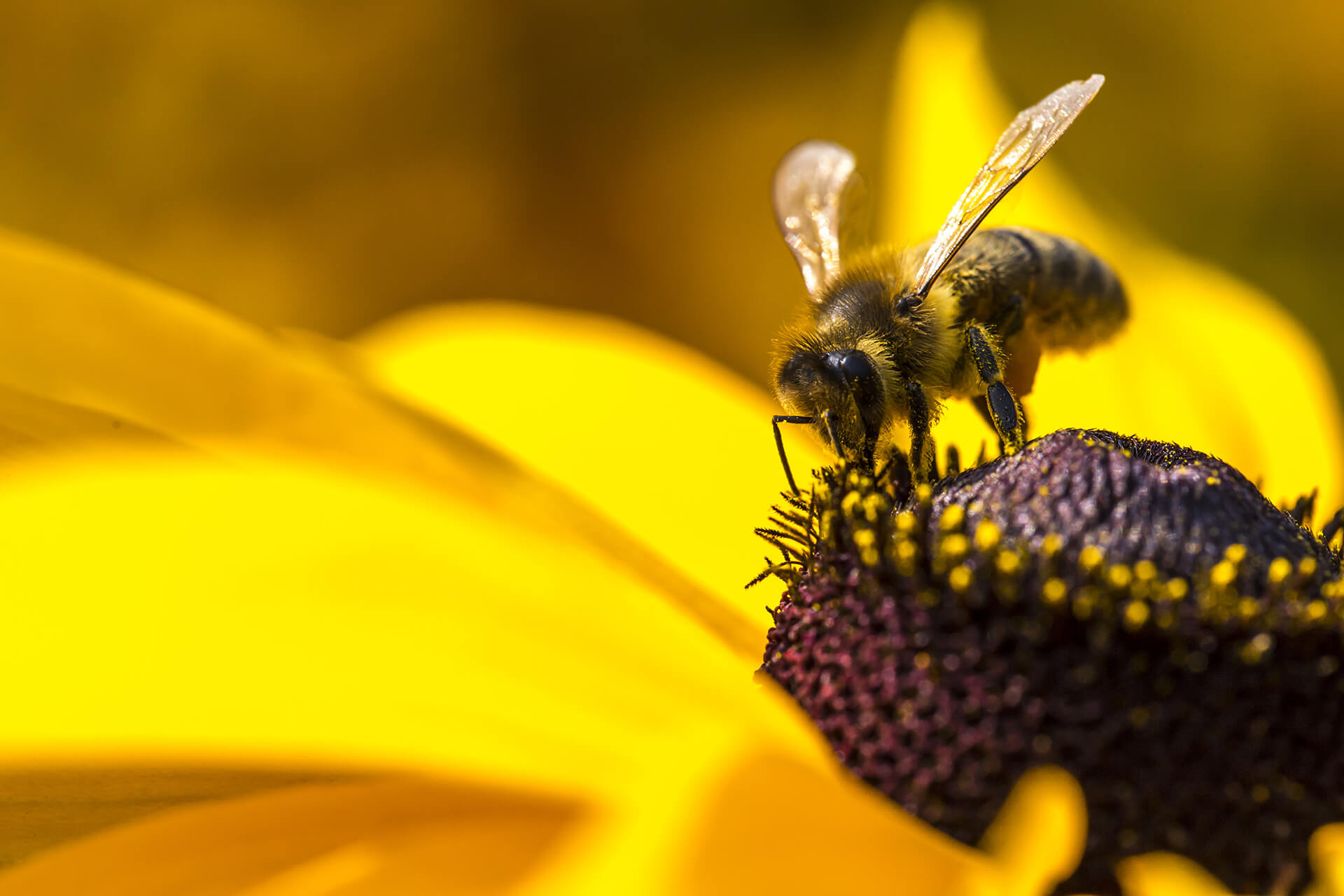 THE FUTURE OF BEEKEEPING IS IN THE HANDS OF THE YOUNG GENERATION